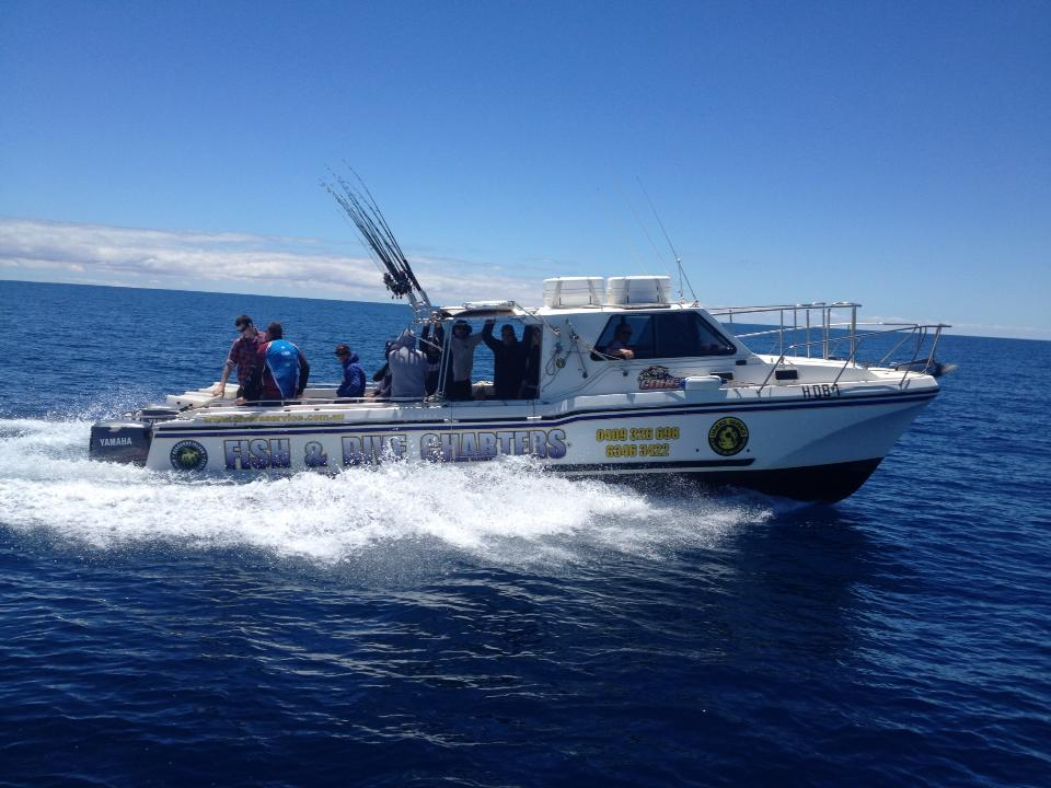 Wild cougar heads to marion bay for Reel action fishing charters